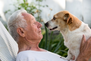 Pets in a Residential park home